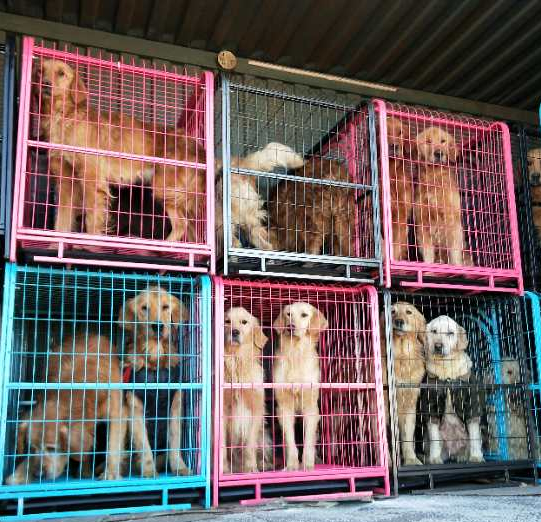 China Dogs Crates