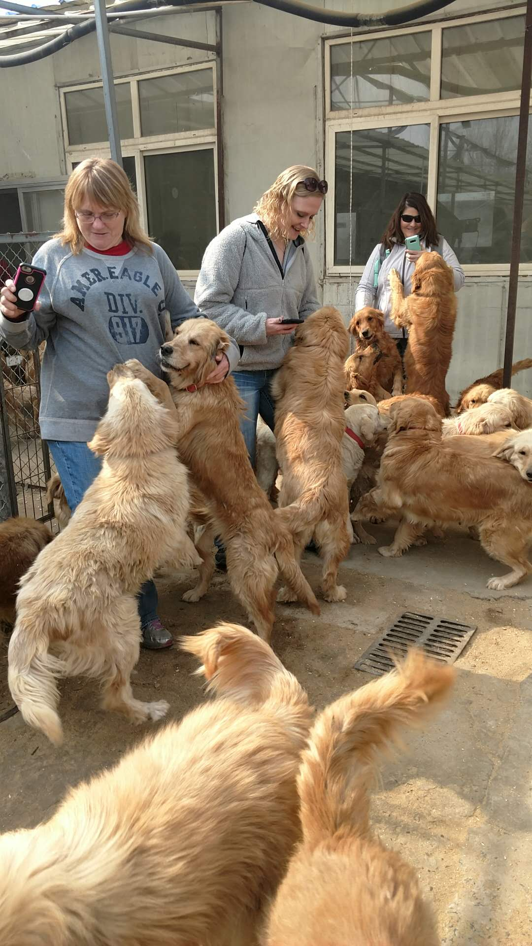 China Dogs and Volunteers