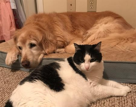 becca and tiff - dog and cat pair