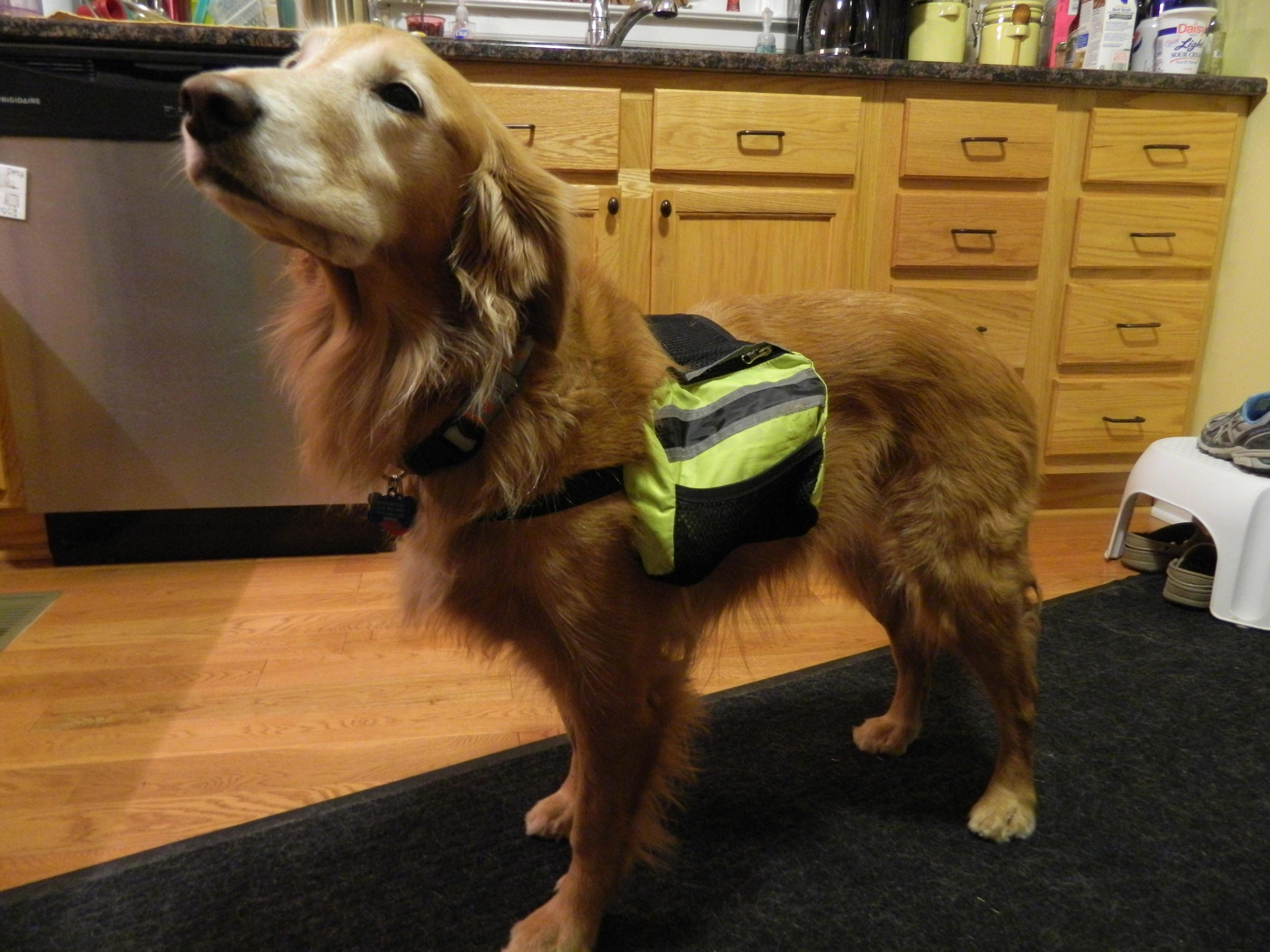What S Normal And First Aid Safety With Gracie Lou